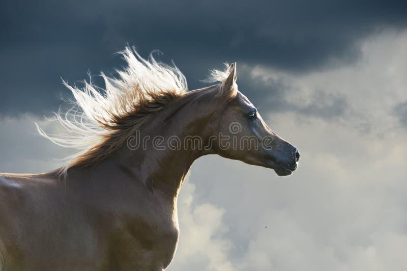 Galope rojo de las corridas del caballo en fondo de las nubes fotos de archivo libres de regalías
