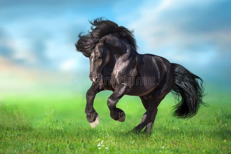 Galopp för körning för utkasthäst på grön äng arkivfoton