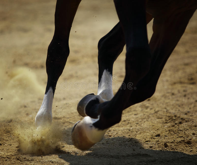 Galoppare del cavallo fotografia stock libera da diritti