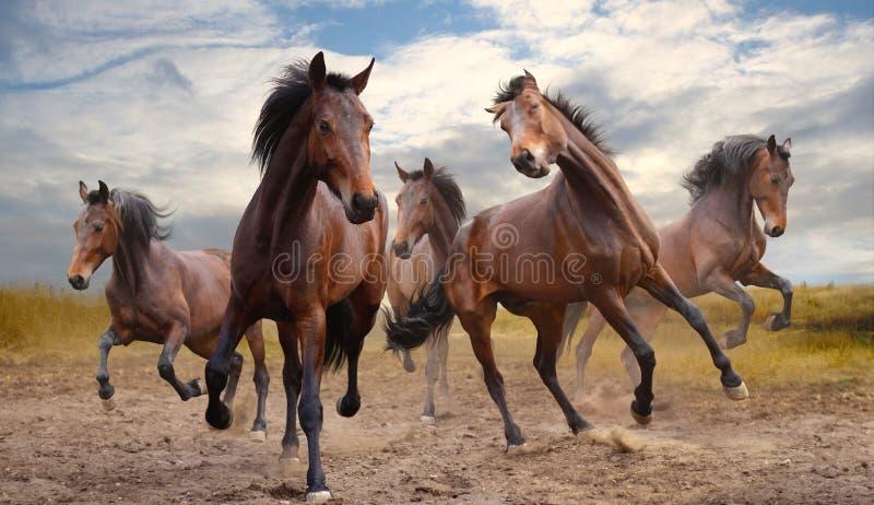 Galoppare del cavallo di Fivebay fotografie stock