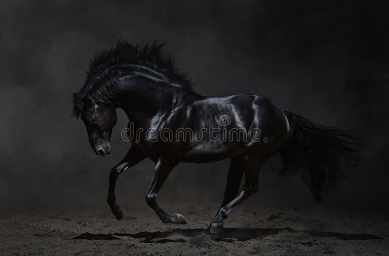 Galopperend zwart paard op donkere achtergrond royalty-vrije stock afbeelding