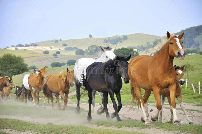 Galopperende paarden stock foto's