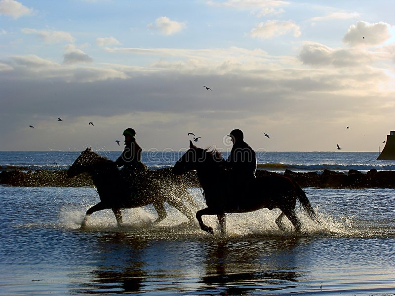 Galoppierende Pferde lizenzfreie stockbilder