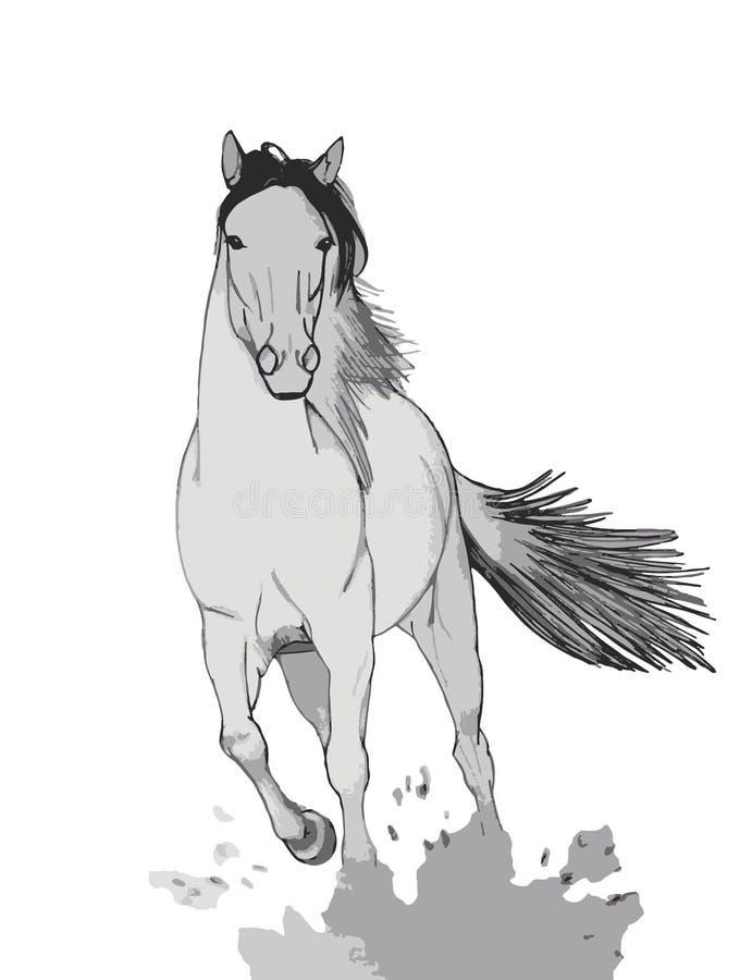 Galoppierende Pferdeillustration lizenzfreie stockfotografie