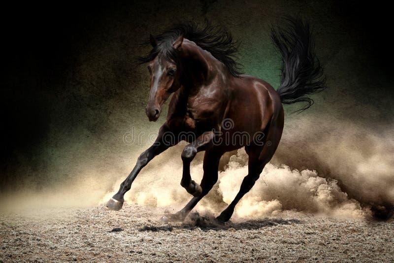 Galoppo del cavallo in deserto immagine stock libera da diritti