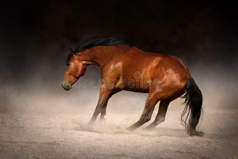 Galoppo del cavallo in deserto fotografie stock libere da diritti