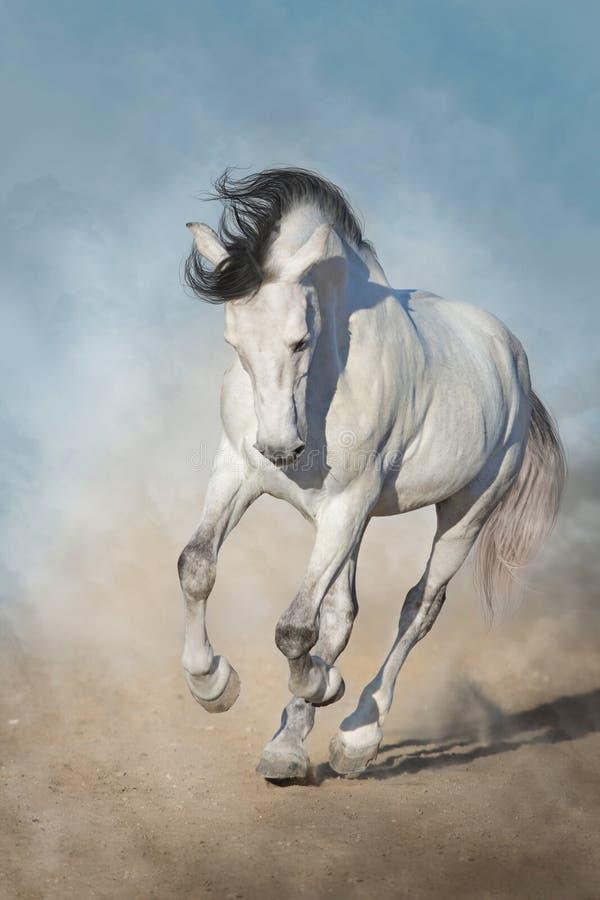 Galoppo di esecuzione del cavallo bianco fotografia stock libera da diritti