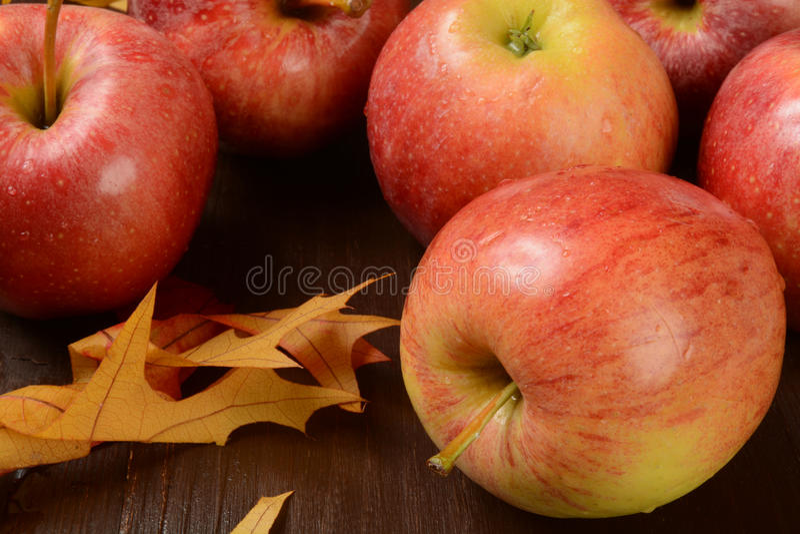 Galowi jabłka obraz stock