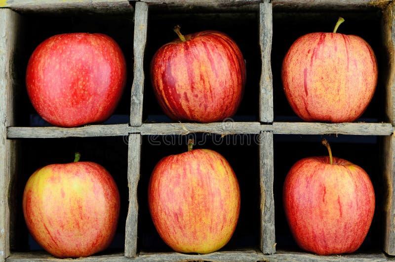Galowy Apple zdjęcie stock