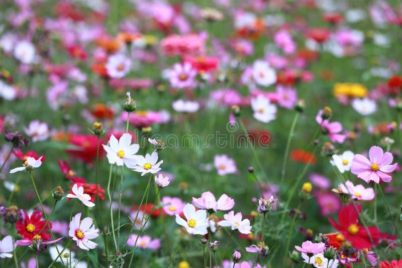 Galsang kwiatu pole w zmierzchu Zieleń, Shanghai fotografia stock