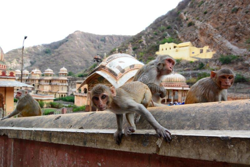 Galtaji apatemplet jaipur Rajasthan india fotografering för bildbyråer