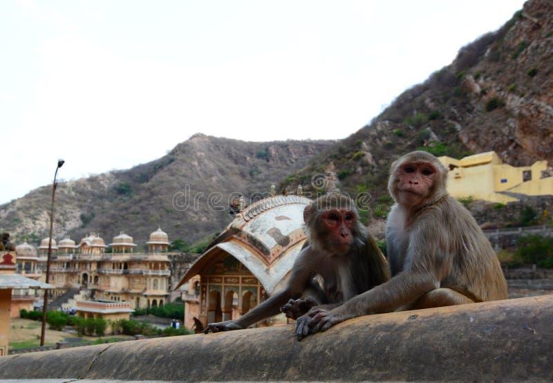 Galtaji apatemplet jaipur Rajasthan india royaltyfri fotografi