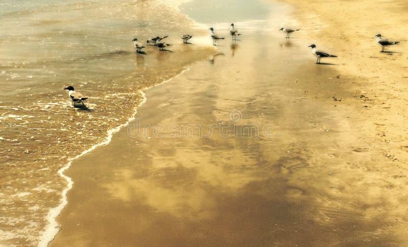Galveston fåglar royaltyfri bild