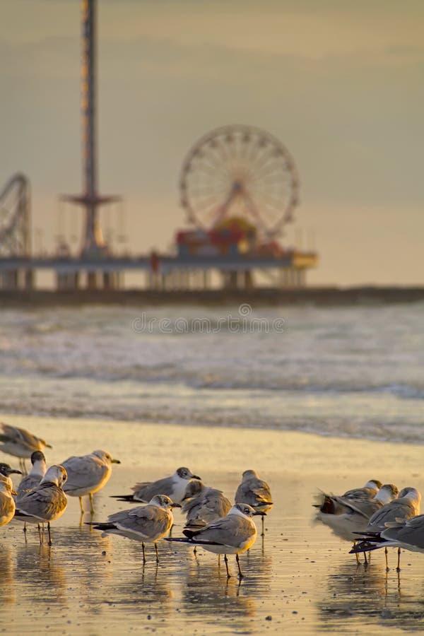 Galveston przyjemności molo przy świtem obraz royalty free