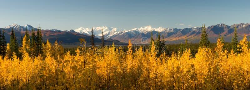 Gama amarilla ardiente de Autumn Color Tress Denali Mountain de la caída fotos de archivo libres de regalías