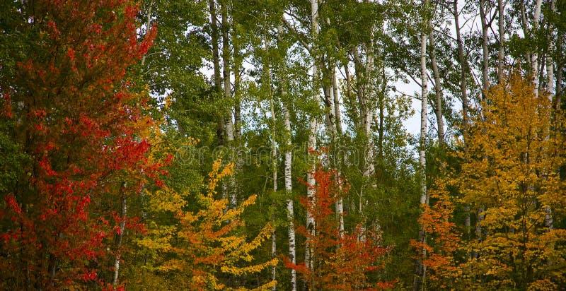 Gama de colores de Minnesota septiembre imagen de archivo libre de regalías