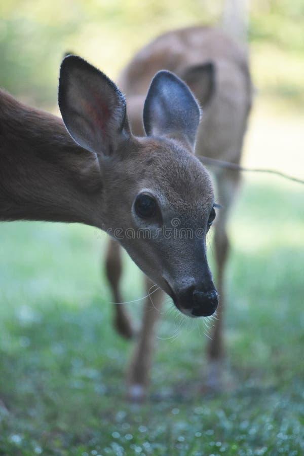 Gama joven linda en el salvaje con los ojos anchos imagen de archivo