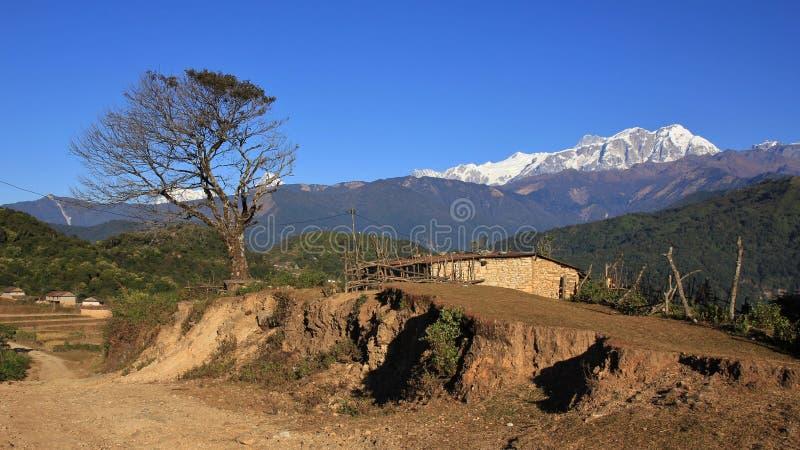 Gama y árbol de Annapurna foto de archivo