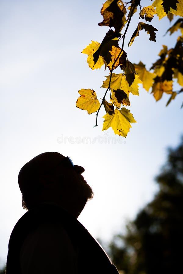 Gamal man i parkera arkivfoton