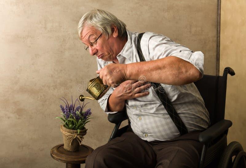 Gamal man som bevattnar växten arkivfoto