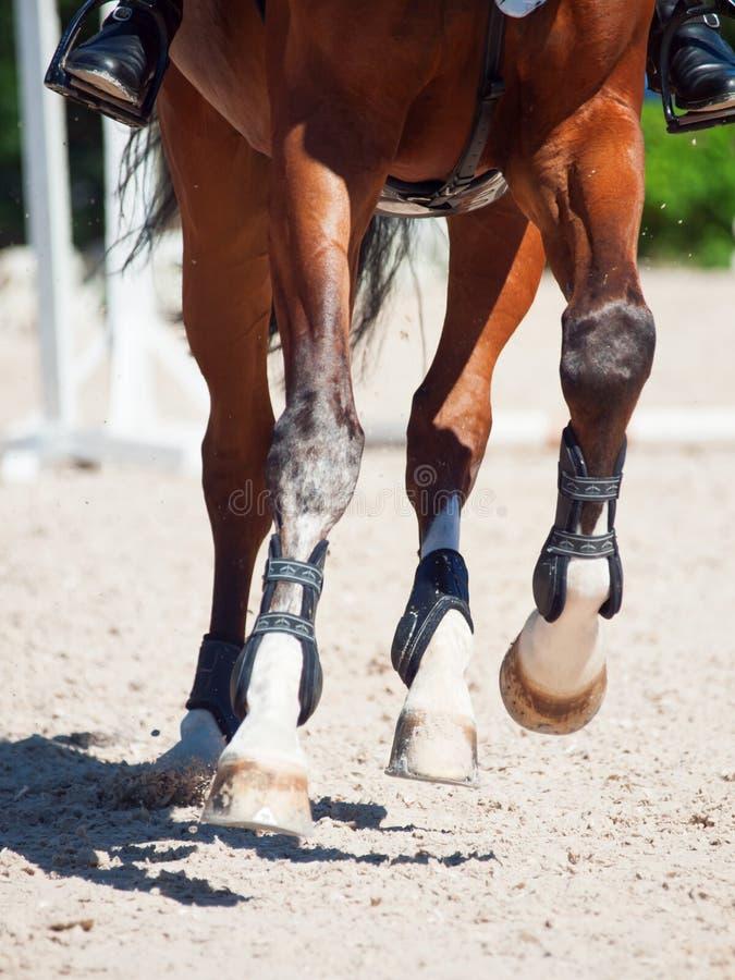 Gambe del cavallo nel movimento Fine in su immagini stock libere da diritti