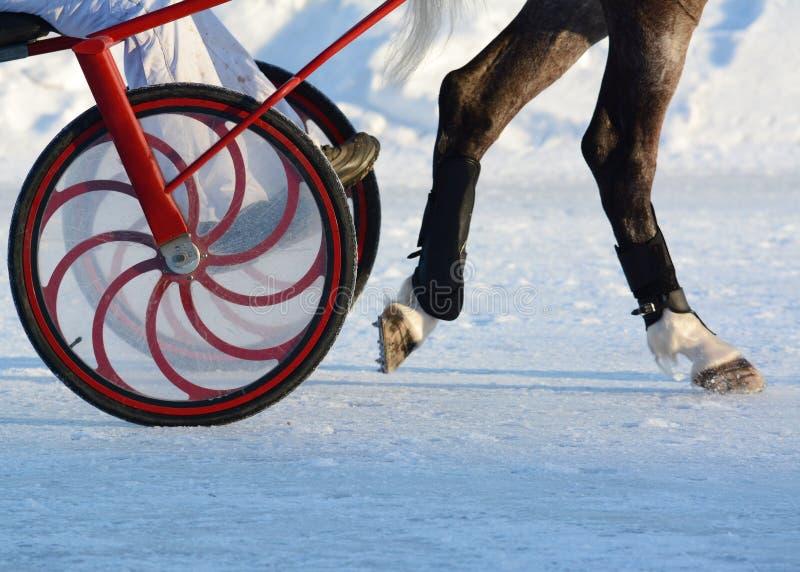 Gambe di un cablaggio del cavallo e del trottatore particolari fotografia stock