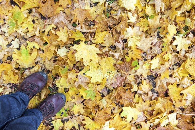 Gambe e scarpe contro il fondo delle foglie di acero fotografie stock