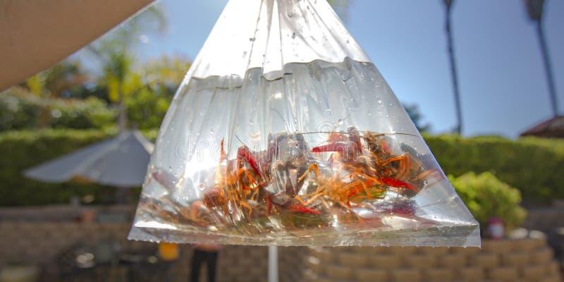 Gamberi d'acqua dolce dentro un sacchetto di plastica con acqua fotografia stock