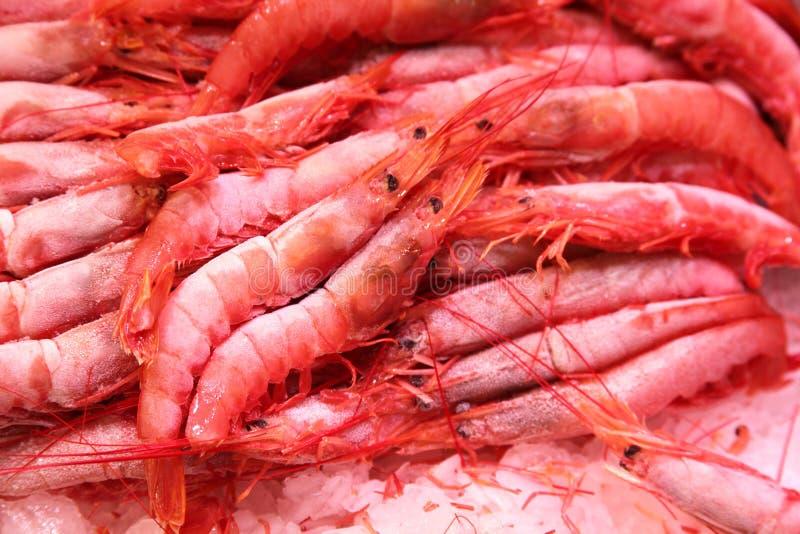Gambero congelato sul mercato dell'alimento immagine stock libera da diritti