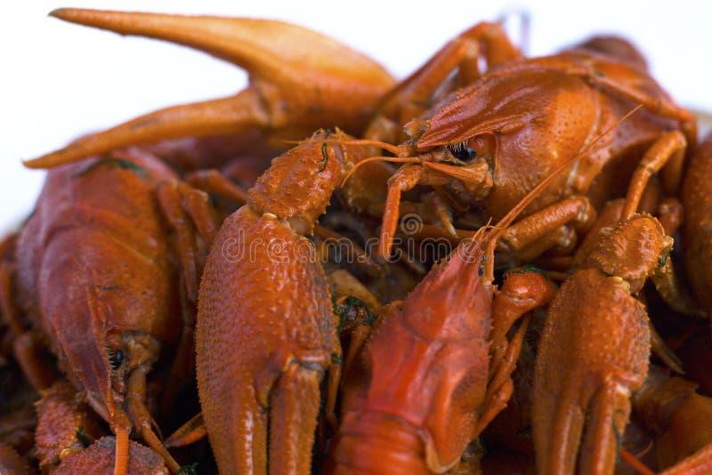 Gambero rosso cucinato in un piatto su un fondo bianco Squisitezza europea della birra della famiglia di artropodo su un fondo bi immagine stock