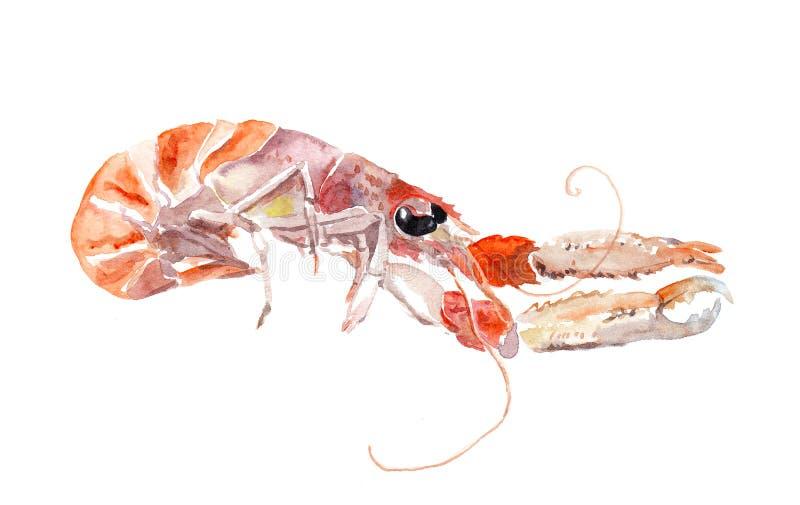 Gambero rosso, gambero, pesce cray Frutti di mare dell'acquerello illustrazione di stock