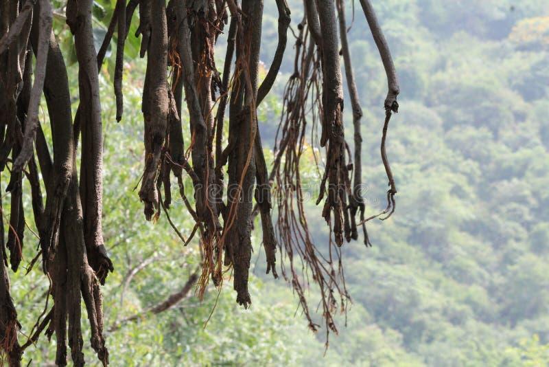 Gambi dell'albero fotografia stock