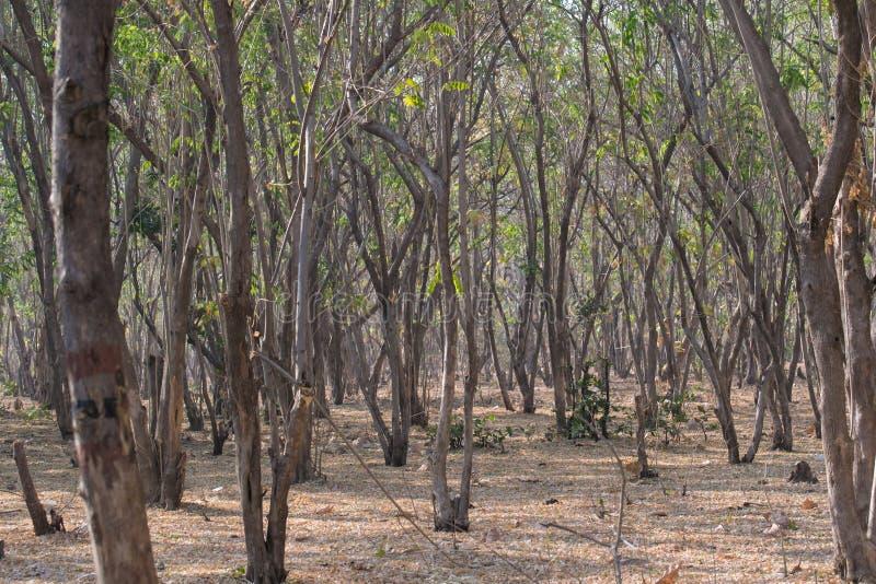 Gambi dell'albero nella foresta fotografie stock
