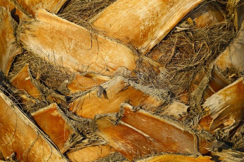 Gambi della foglia della palma fotografia stock