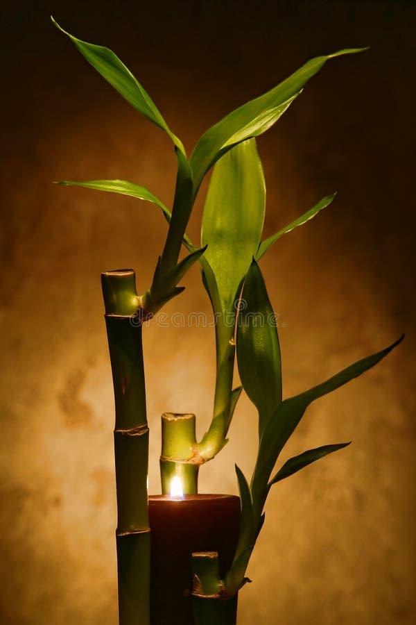 Gambi di bambù con le candele Burning per la meditazione immagine stock libera da diritti