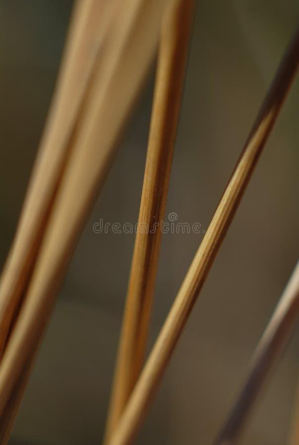 Gambi di erba selvatica immagini stock