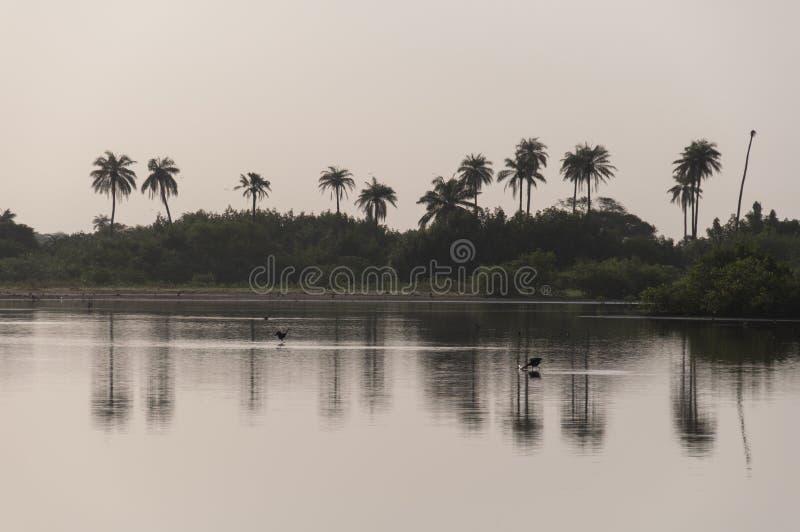 Gambia rzeka zdjęcia stock