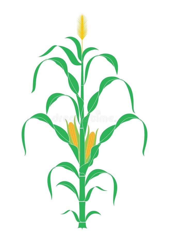 Gambo astratto del cereale Pianta Vettore illustrazione vettoriale