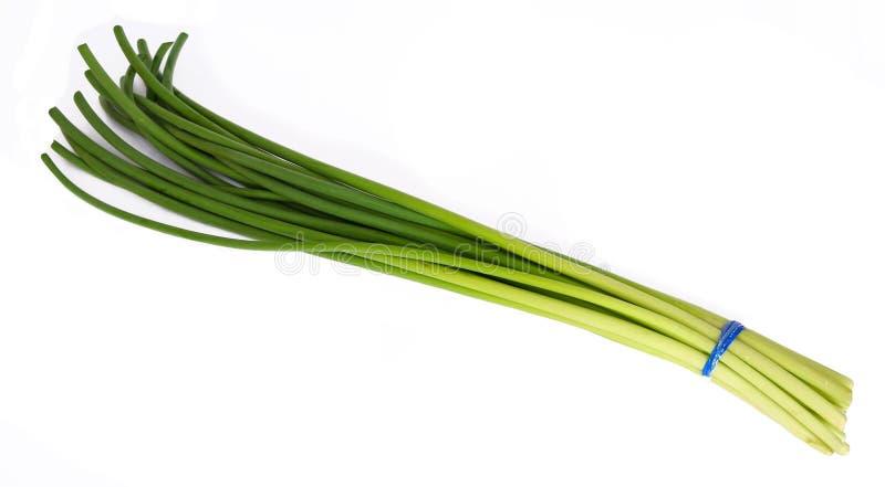 Gambo dell'aglio fotografia stock
