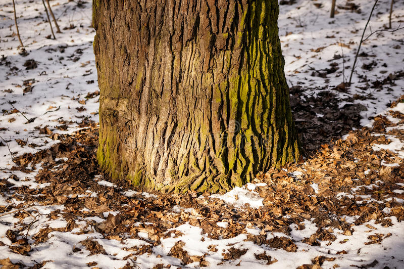 Gambo dell'albero immagine stock libera da diritti