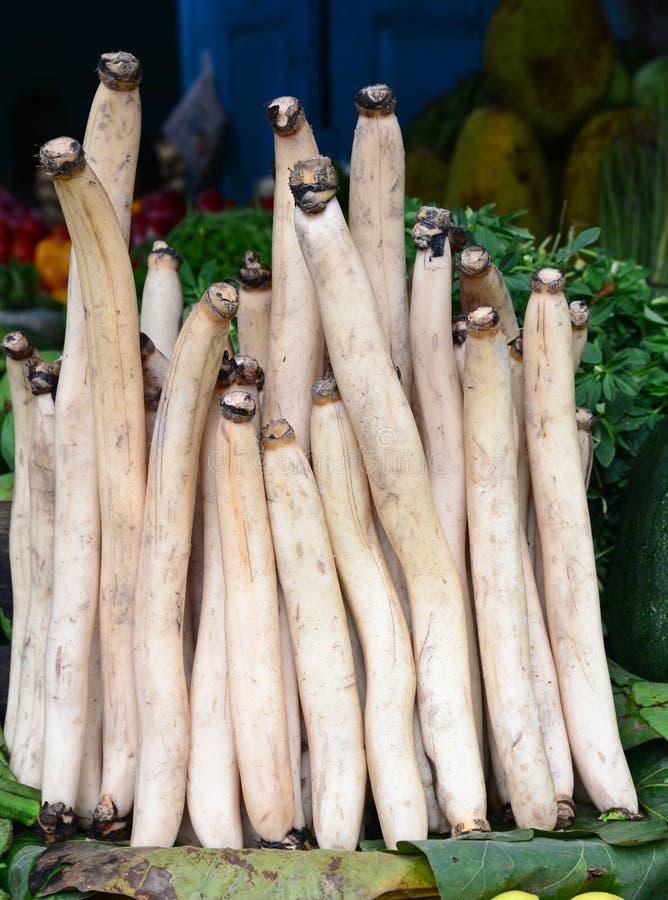 Gambo di verdura-Lotus dell'indiano immagini stock