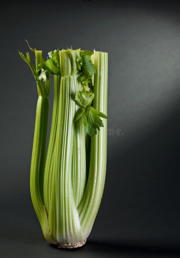 Gambo verde del sedano fotografie stock libere da diritti