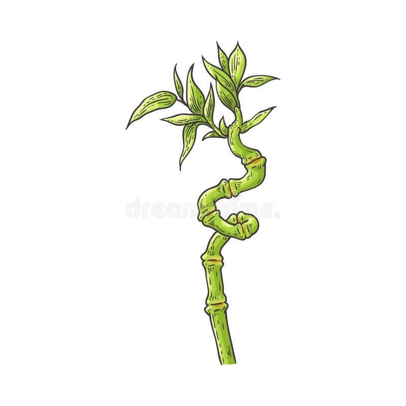 Gambo verde di bambù con le foglie nello stile di schizzo illustrazione di stock