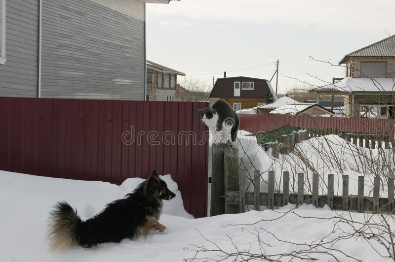 Game cats and dogs stock photos