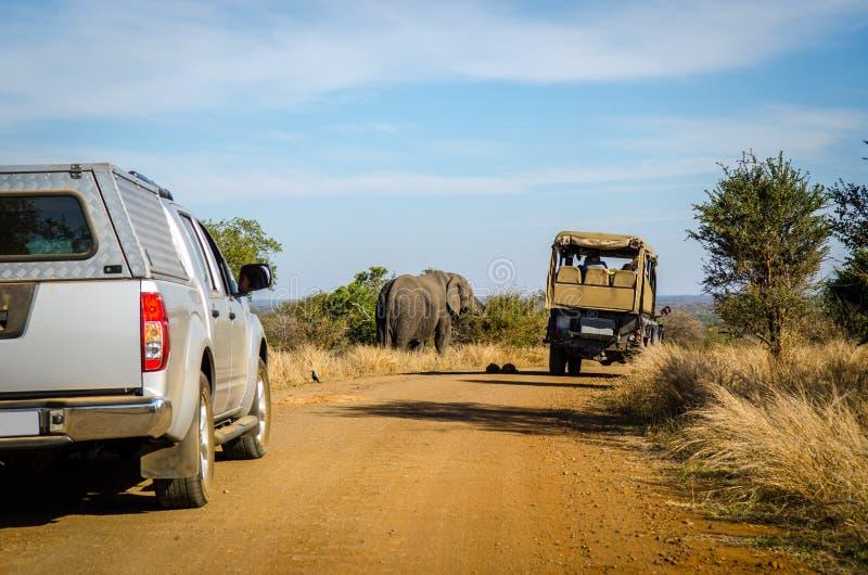 Game drive safari, Elephant Kruger park, South Africa. Game drive safari animal, elephant near the off road car. Kruger park, South Africa royalty free stock photography