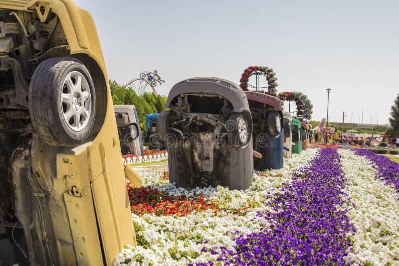 Gamla bilar i rabatterna i det Dubai miraklet arbeta i trädgården arkivbilder