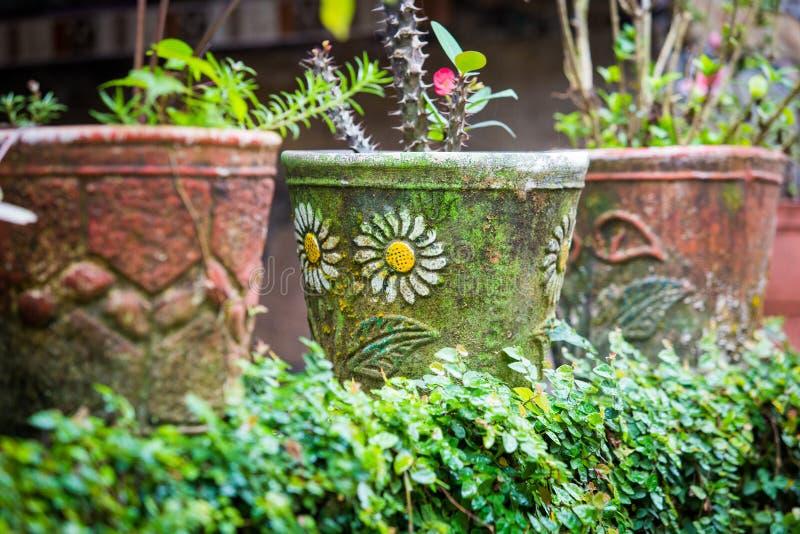 Gamla blomkrukor i trädgården royaltyfri fotografi