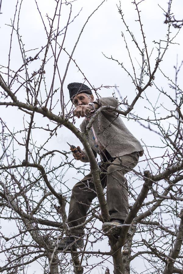 Gamla bondebrämträd i hans fruktträdgård in royaltyfria foton