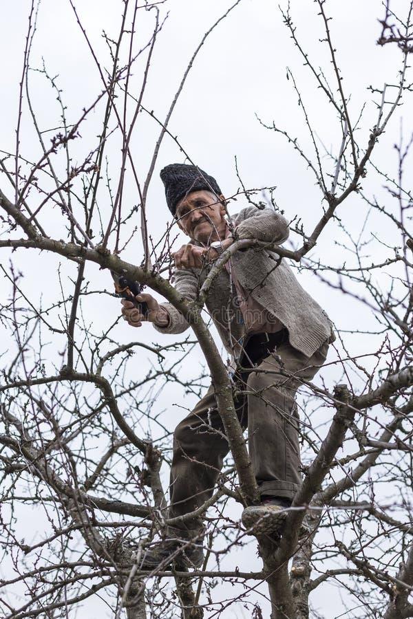Gamla bondebrämträd i hans fruktträdgård royaltyfri foto