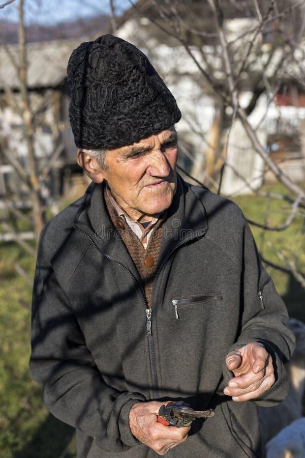 Gamla bondebrämträd i hans fruktträdgård royaltyfria foton